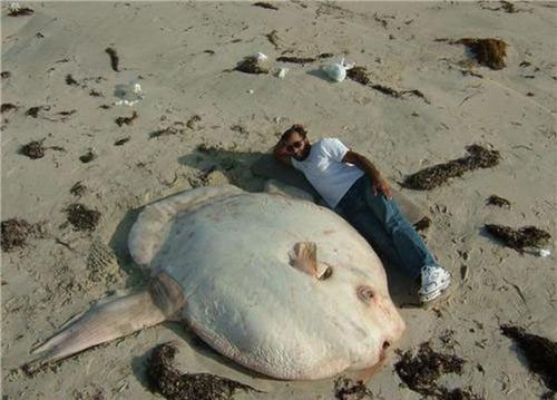 巨大な生き物19