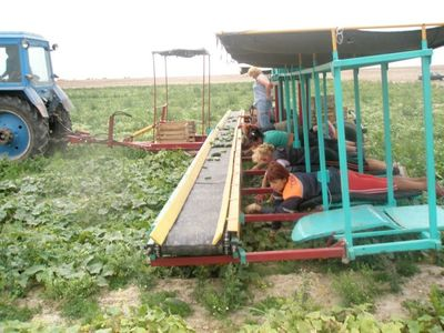 半自動きゅうり収穫機01