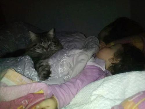 女の子を守る猫10