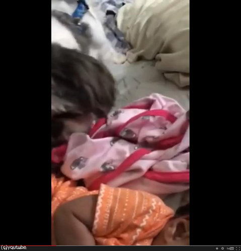 赤ちゃんにブランケットを掛けてあげる犬02