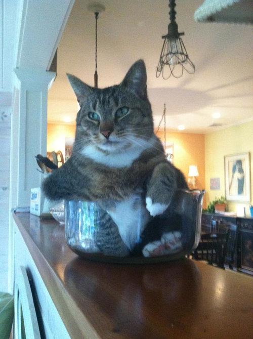 猫は液体説06
