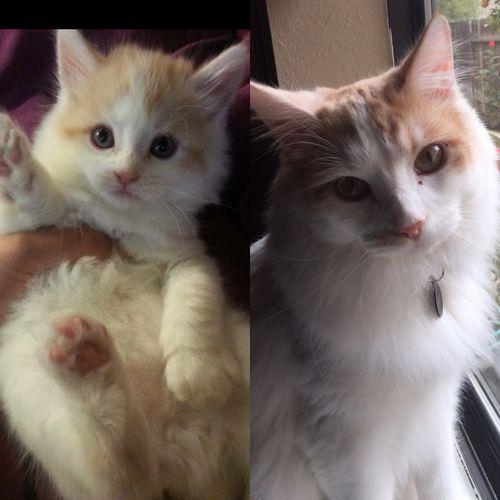 子猫が育ったら…しっぽが一番成長した01