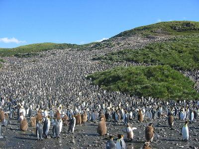 12万羽のペンギン
