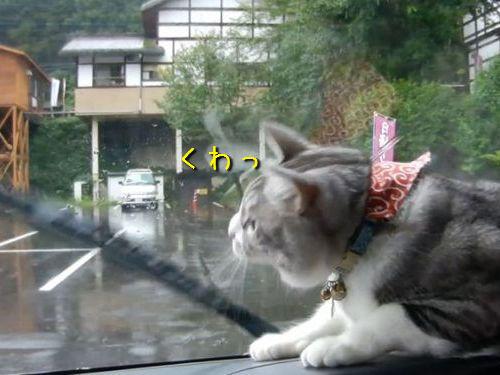 ワイパーと猫00