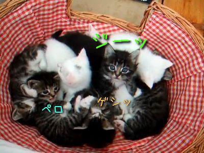 カゴいっぱいの子猫