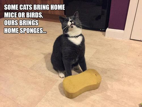 おかしな猫たち18