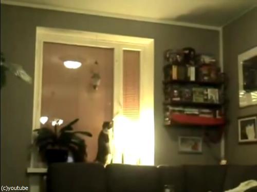 猫のストレッチをいろんな角度から眺めてみた05