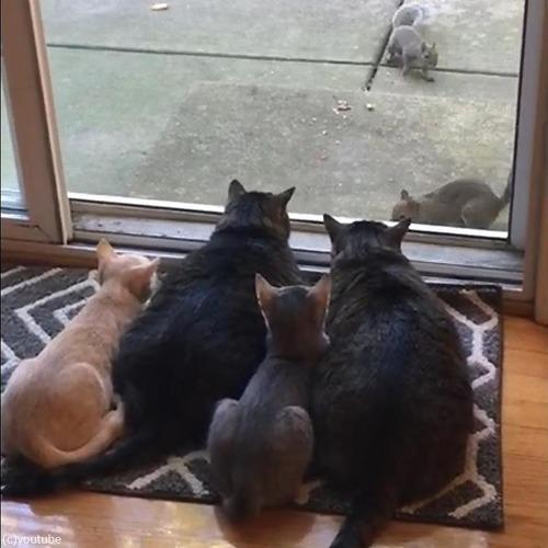 リスが気になる猫ファミリー03
