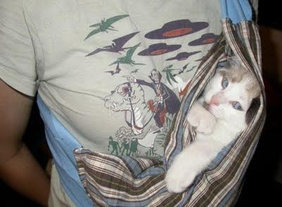 胸元の猫02