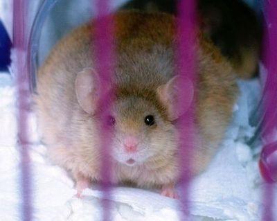 太りすぎ動物13