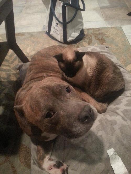 猫にベッドを奪われた犬たち22
