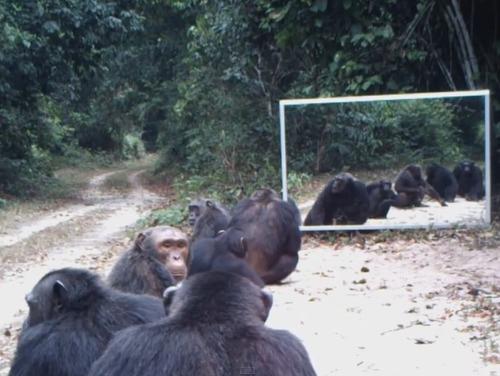 野生動物と鏡01