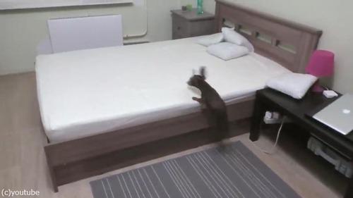 ベッドの上で遊ぶことを許可されて、大興奮するダックス01