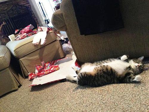クリスマスとペット25