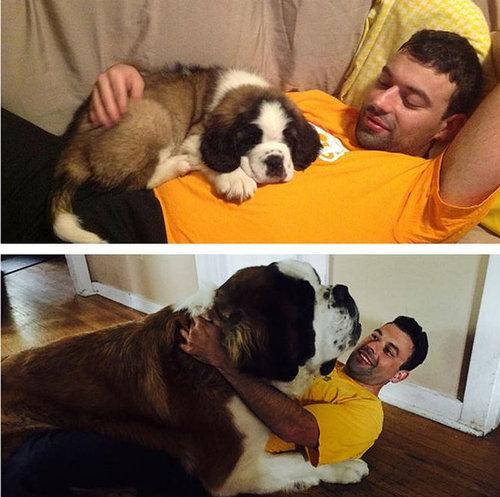 犬を飼うべき理由32