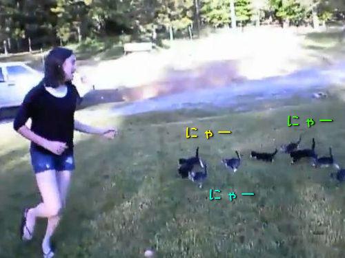 子猫の軍団に追いかけられる女の子