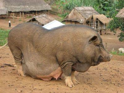 太りすぎ動物09