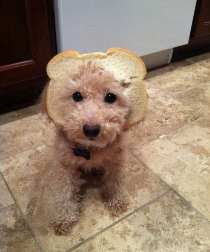 犬とパンの耳12
