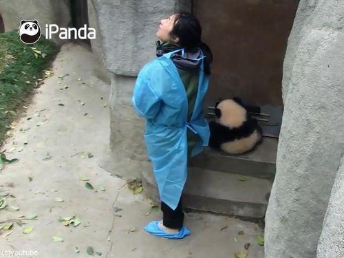 ドアストッパーな赤ちゃんパンダ05