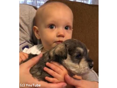 泣いてる赤ゃんに子犬を抱かせたら…こんなに表情が明るくなった!00