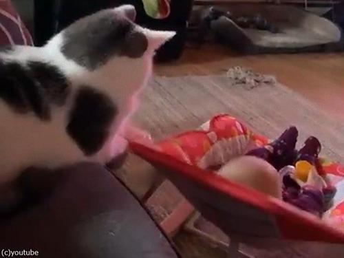 片手間に赤ちゃんをあやす猫00