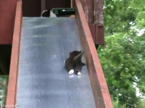 滑り台を落ちる子猫を助ける親猫…まさかのオチ04