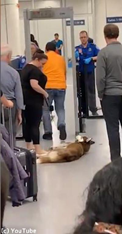 空港で駄々をこねるワンさん02