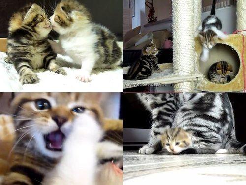 猫から学ぶ、彼氏としてのふるまい00