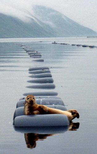 休憩中でリラックス中の動物たち14