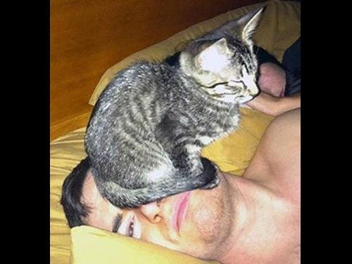 おかしな猫たち00