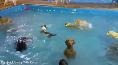 カメラ目線の犬03