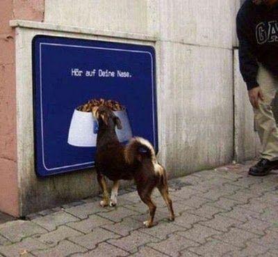 犬の失敗10