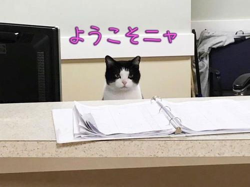 老人ホームの主となった野良猫00