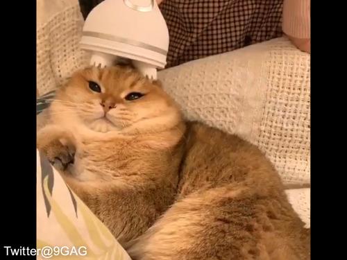 猫、マッサージ機の気持ち良さに気付いてしまう00