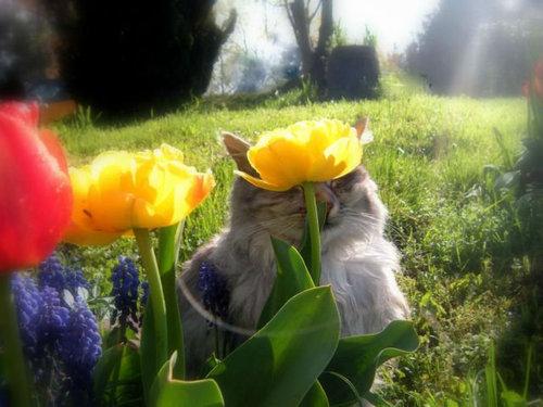 02かくれんぼする猫たち