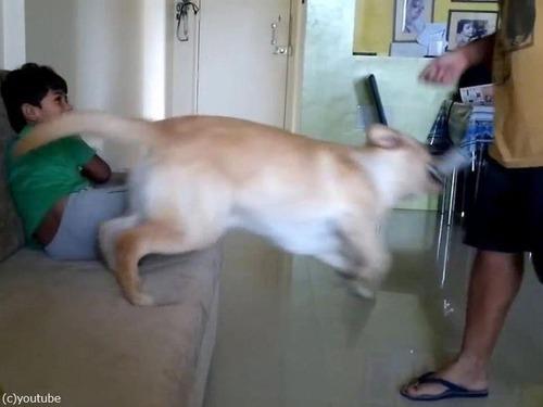 犬が男の子を父から救おうとする06