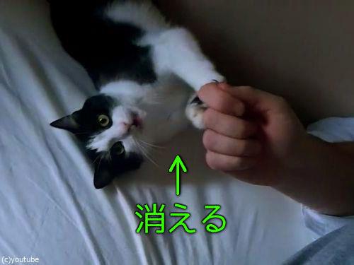 猫がベッドの隙間に吸い込まれる00