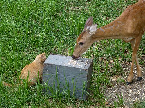 鹿と猫05