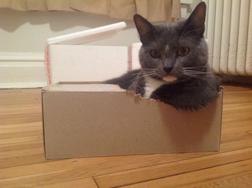 うちの猫がダンボール箱を噛んだ理由01