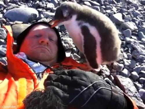 ペンギンのひなが乗ってきた07