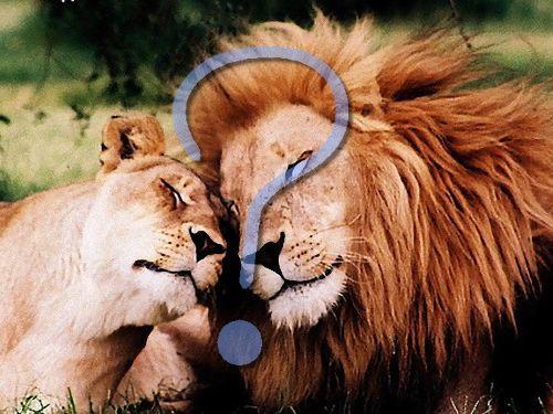 ライオンとノアの方舟00