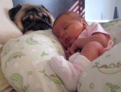 パグと赤ちゃん08