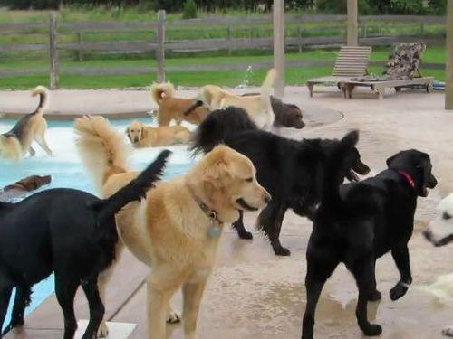 犬のプールパーティ01