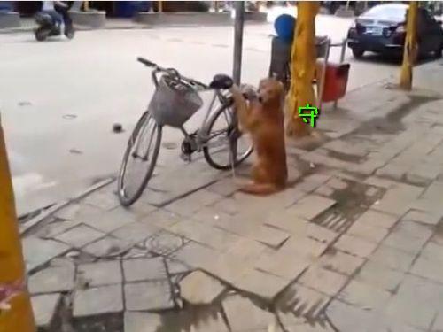 自転車の警備をする犬00
