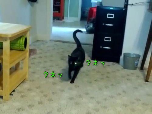 オシャレな歩き方の猫00