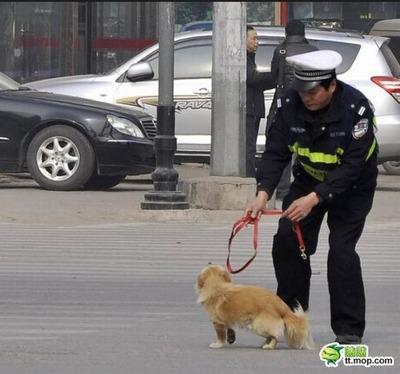 犬と警官04