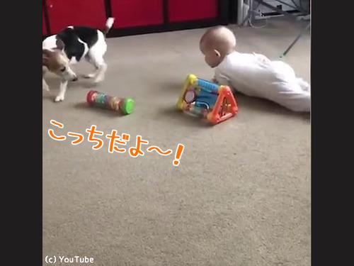 赤ちゃんにハイハイを教える犬00