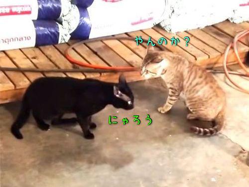 ケンカする猫2匹と止める犬2匹00