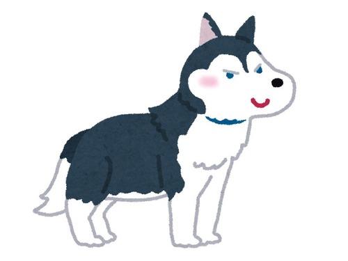 犬「飼い主に彼女ができた日までは、とても幸せだった」