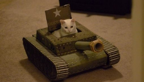 猫と乗り物09